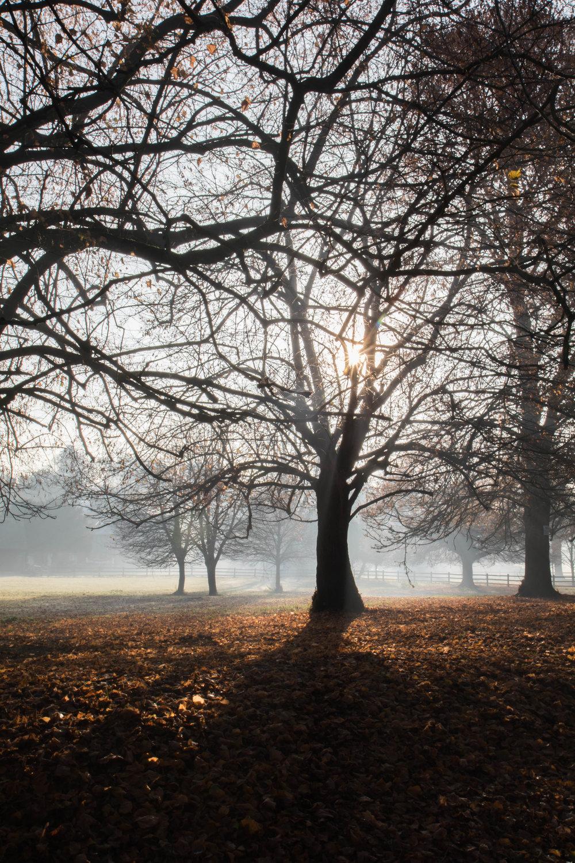 Misty Winter Mornings - Shannon Hammond Photography-24.jpg