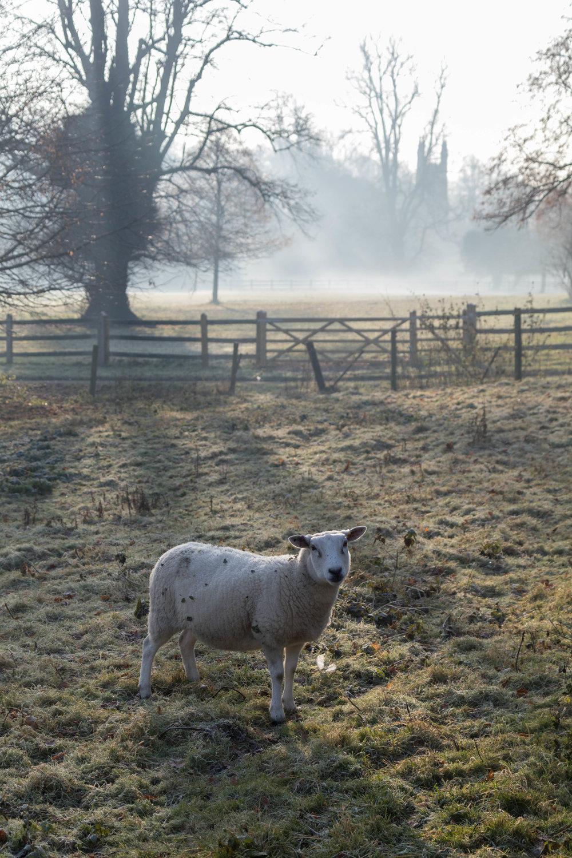 Misty Winter Mornings - Shannon Hammond Photography-25.jpg