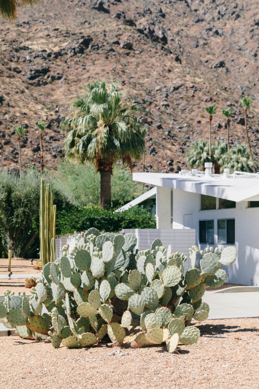 Shannon Hammond Photography - Palm Springs-27.jpg
