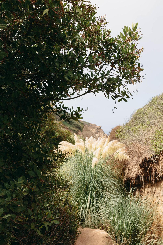 San Diego Hikes - Shannon Hammond Photography-4.jpg