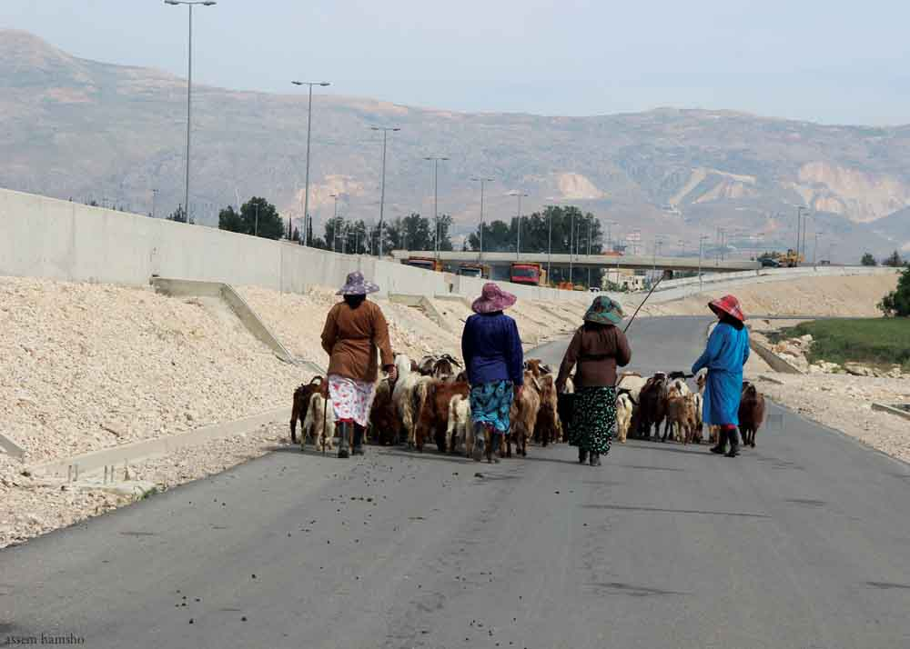 Women+in+Lebanon+herd+goats.jpg