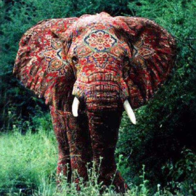 Elephant Photo.jpg
