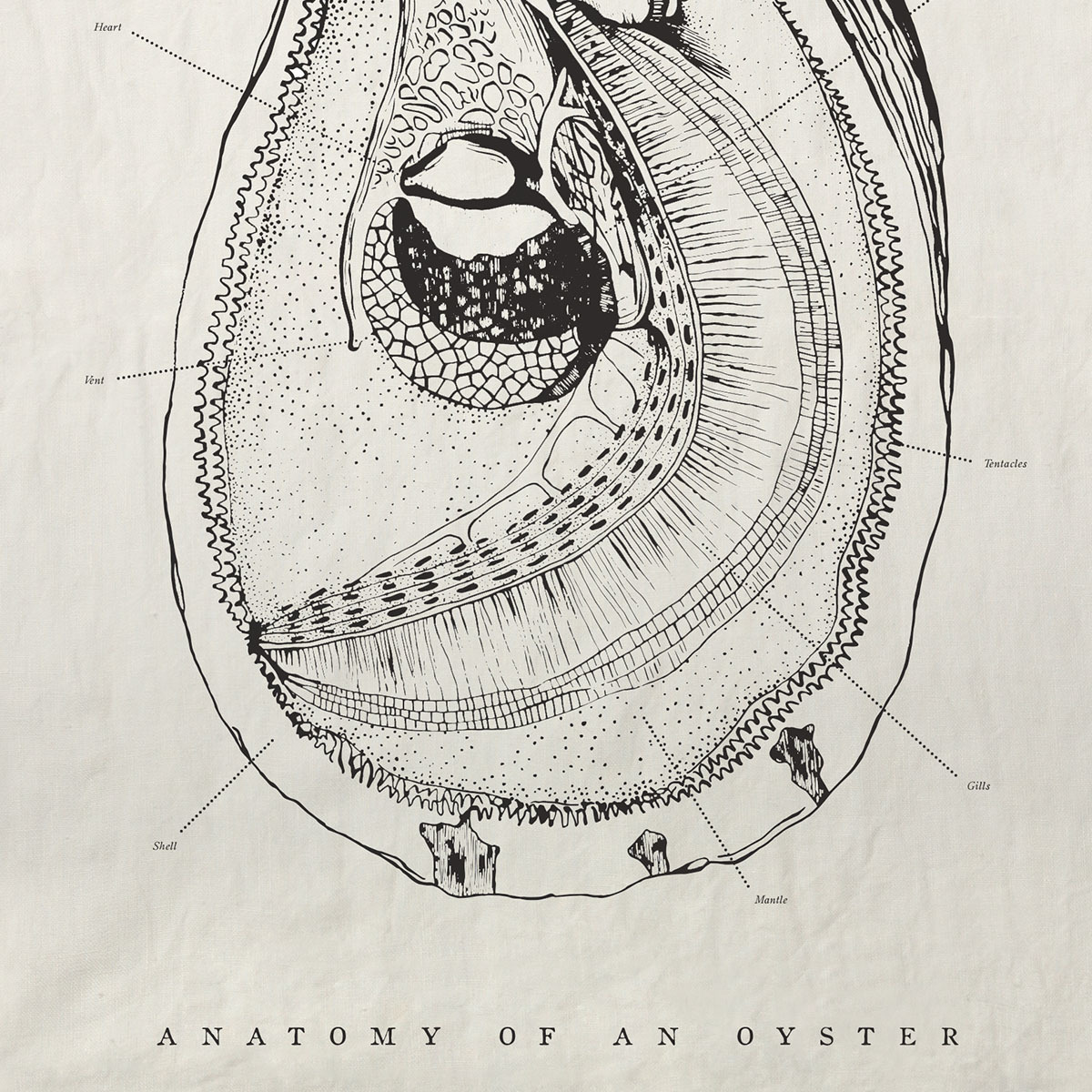 OYSTER ANATOMY PURE LINEN TEA TOWEL —