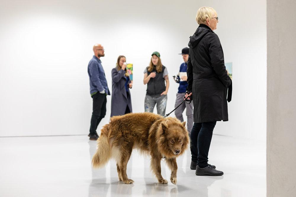 Hund om det  Photo: Oddbjørn Erland Aarstad