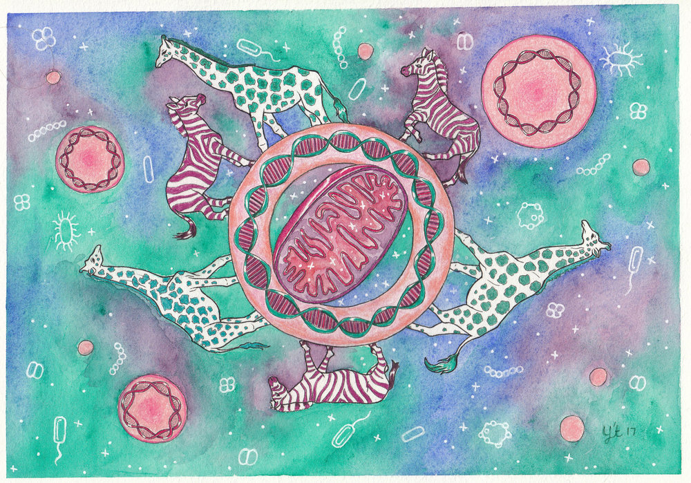 Mitochondria Meditation