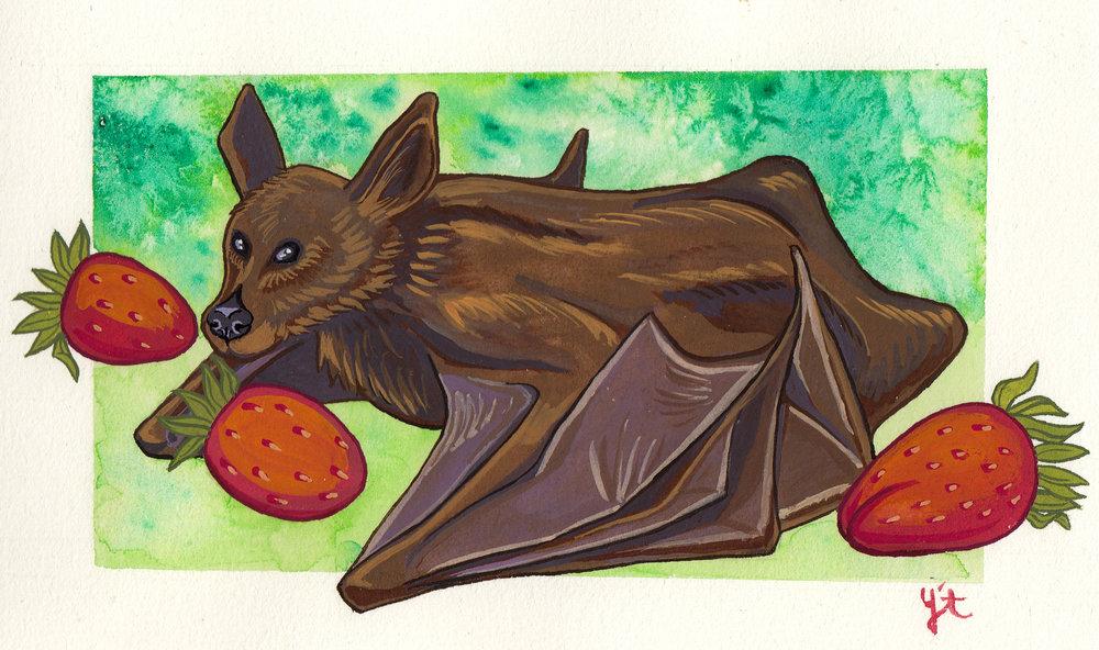 fruit bat.jpg