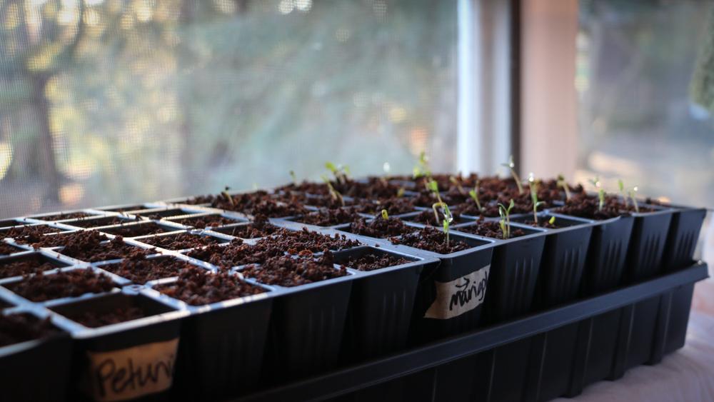Starter plants-10-3