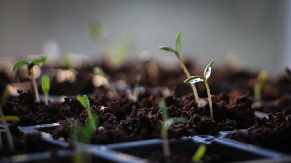 Starter plants-10-4