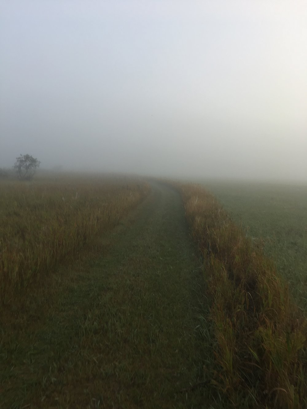 I absolutely loved this.  It was different running on the grass path with ruts here and there but it was so much fun and so different.  The fog and dew were so heavy that my shoes and socks were quickly soaked!!   Part of me was sad that I didn't get to see the sunrise and lake that I had been so excited to see, but yet other parts of me were SO GLAD that I couldn't see what was ahead of me at times....