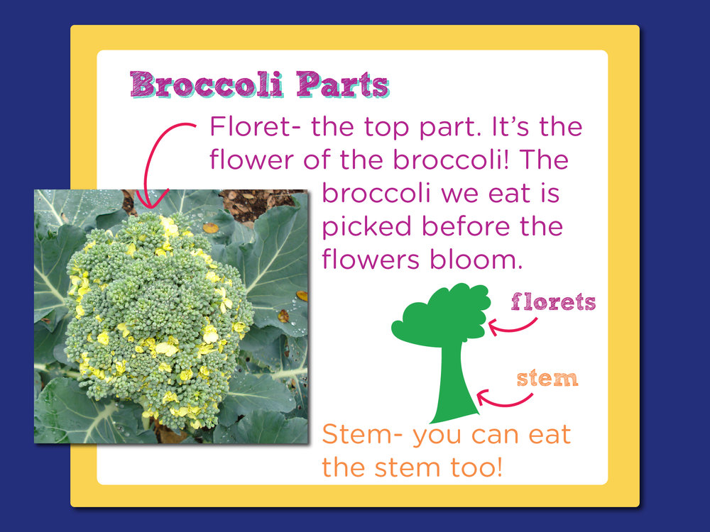 07_ChickenAndBroccoli_broccoli learning-01.jpg