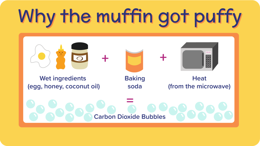 24_BlueberryMugMuffin_why the muffin got puffy-01.png