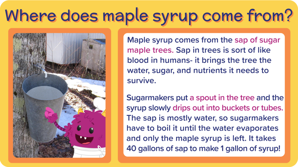 22_PecanChocolateChunkCookies_Where maple syrup come from-01.png