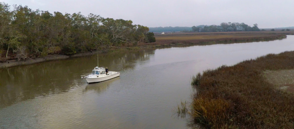Boat Tour Edisto River Marsh Wildlife Dolphin Creek ACE Basin Edisto Beach Coastal