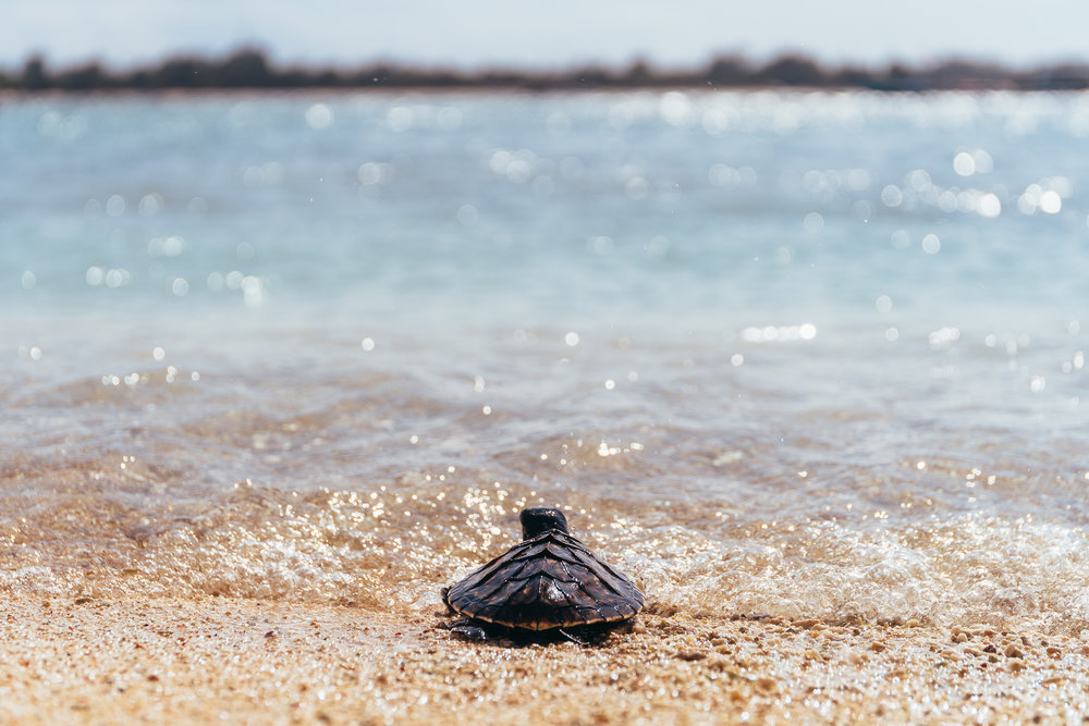 This turtle, upon being released, is about to get to know the Gili Islands as well.
