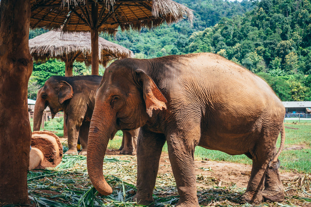 Chiang Mai Elephant Nature Park-11.jpg