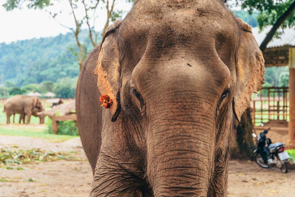Chiang Mai Elephant Nature Park-7.jpg