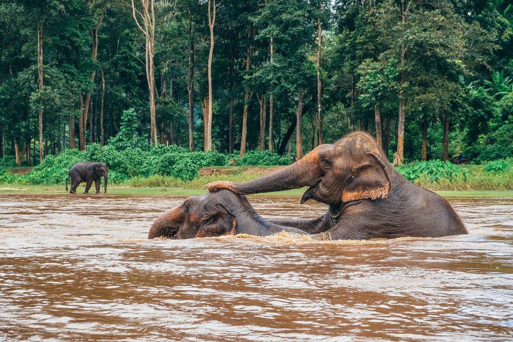 Chiang Mai Elephant Nature Park-17.jpg