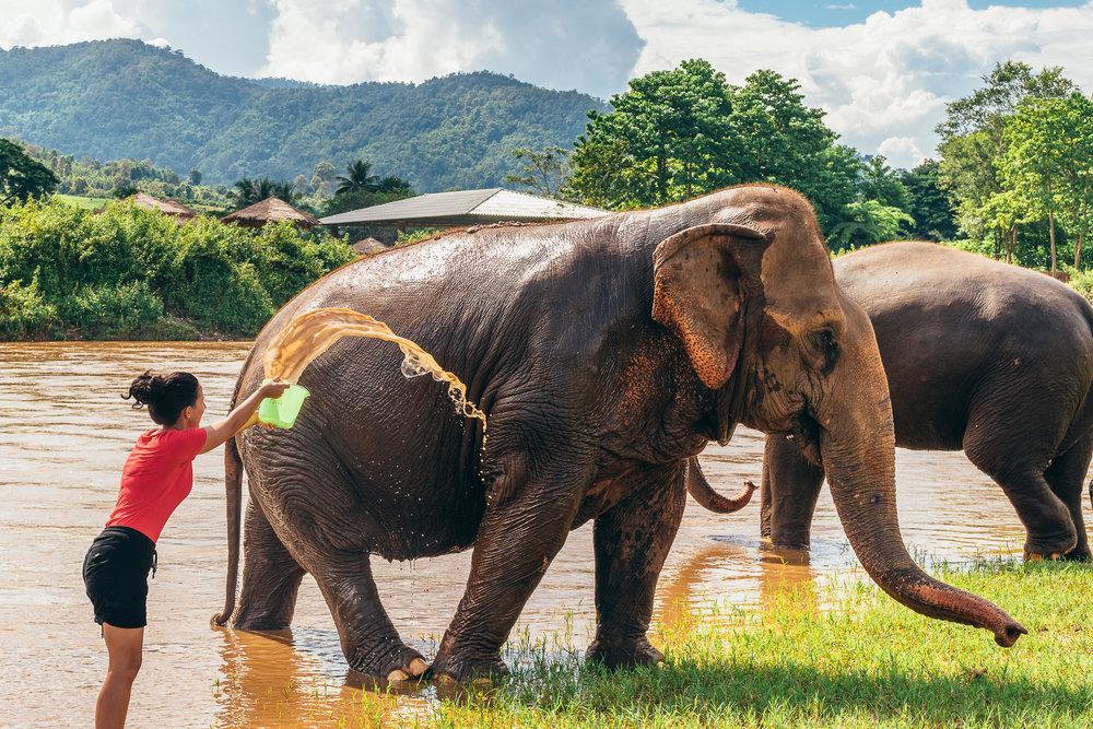 Chiang Mai Elephant Nature Park-24.jpg
