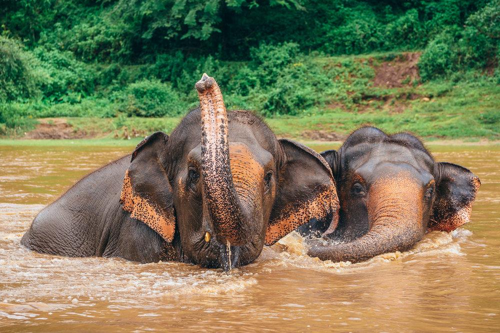 Chiang Mai Elephant Nature Park-18.jpg