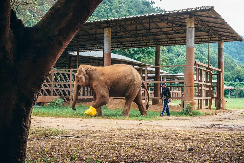 Chiang Mai Elephant Nature Park-4.jpg