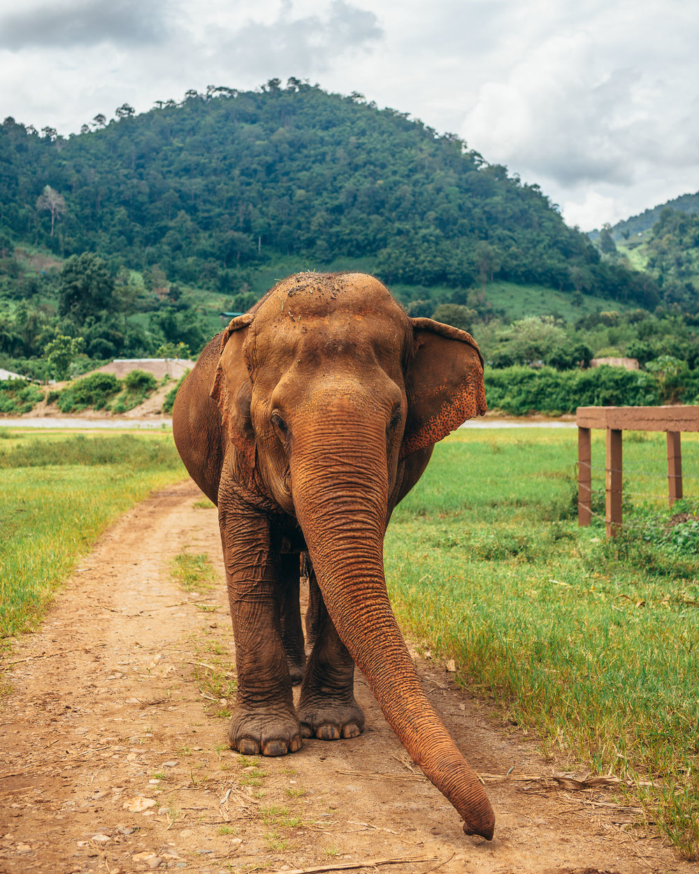 Chiang Mai Elephant Nature Park-14.jpg