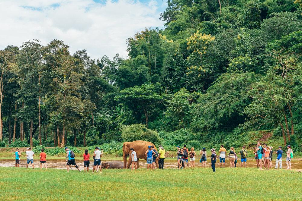 Chiang Mai Elephant Nature Park-16.jpg