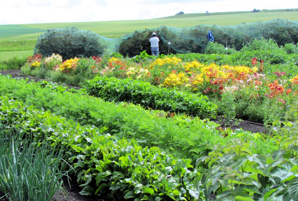 organic-veggie-garden.png