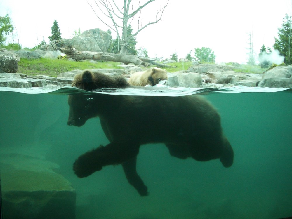 (Minnesota Zoo - Bear)RGC Opening 6-4-08 184 (Original).jpg