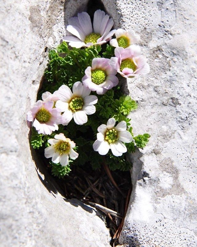 Flowers growing through concrete are proof that growth is always possible out of ever situation you are put into.