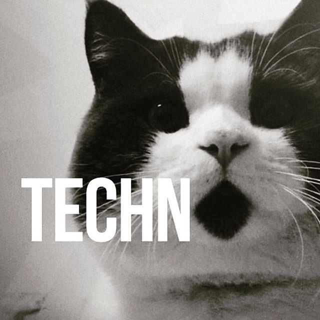 The only kinda cats I trust #techno #kitty #cats that #listen to #beats #instacats #music