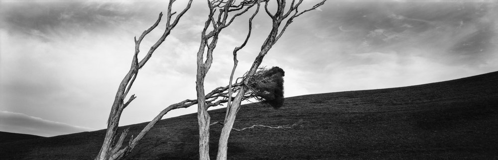 BENT TREES.jpg