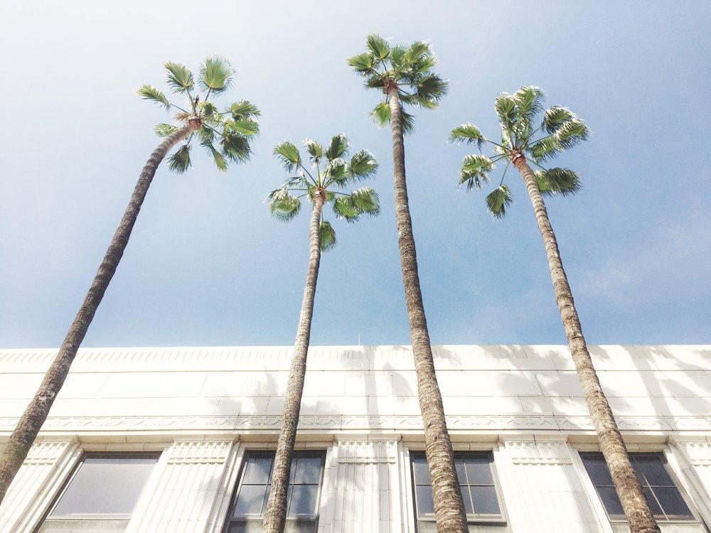 4 palms LA.jpg