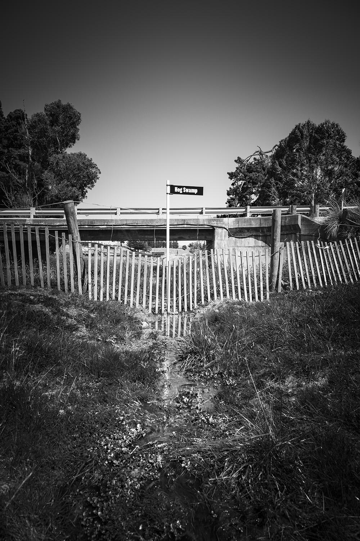 Hog_Swamp_©ag_DSC9502.jpg
