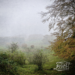 iamforest - i am forest - Meadows EP