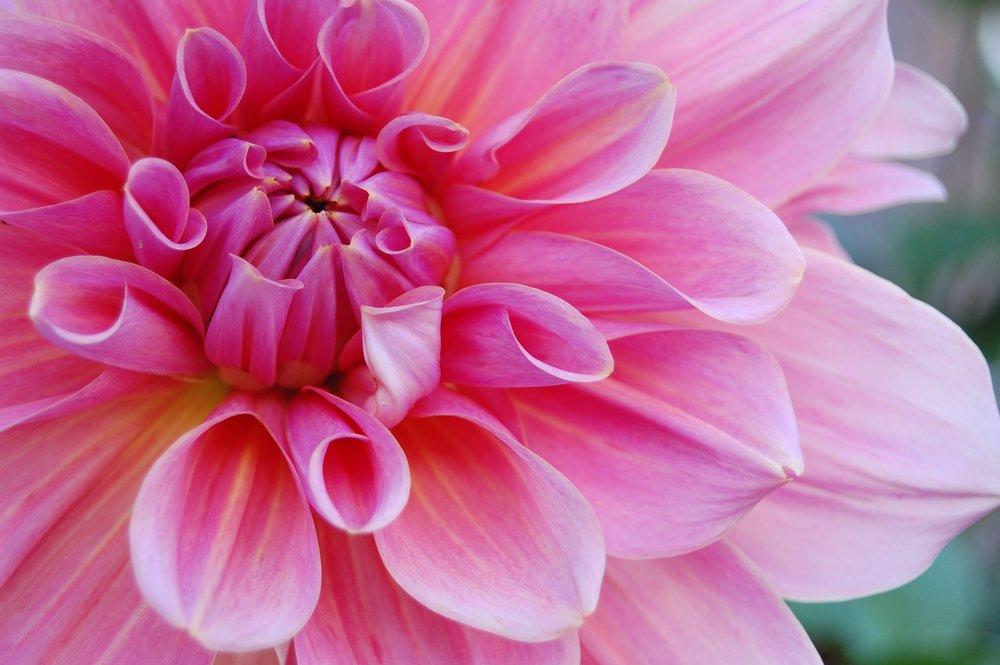flower-1181865.jpg