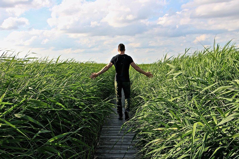 high-grass-1504280_1920.jpg