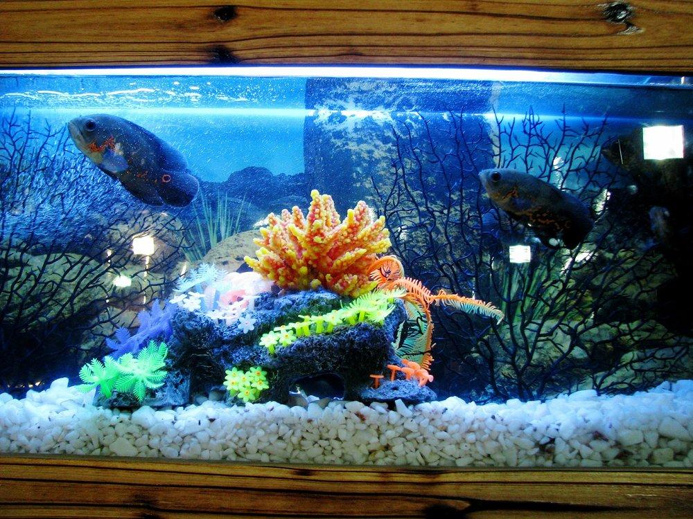 aquarium-390745_1920.jpg