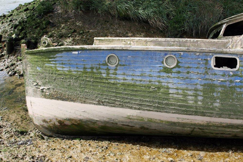 aquatic-1238784_1920.jpg