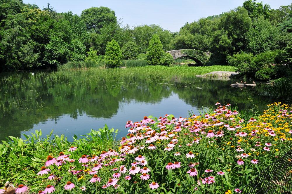 Central Park Flowers.jpg
