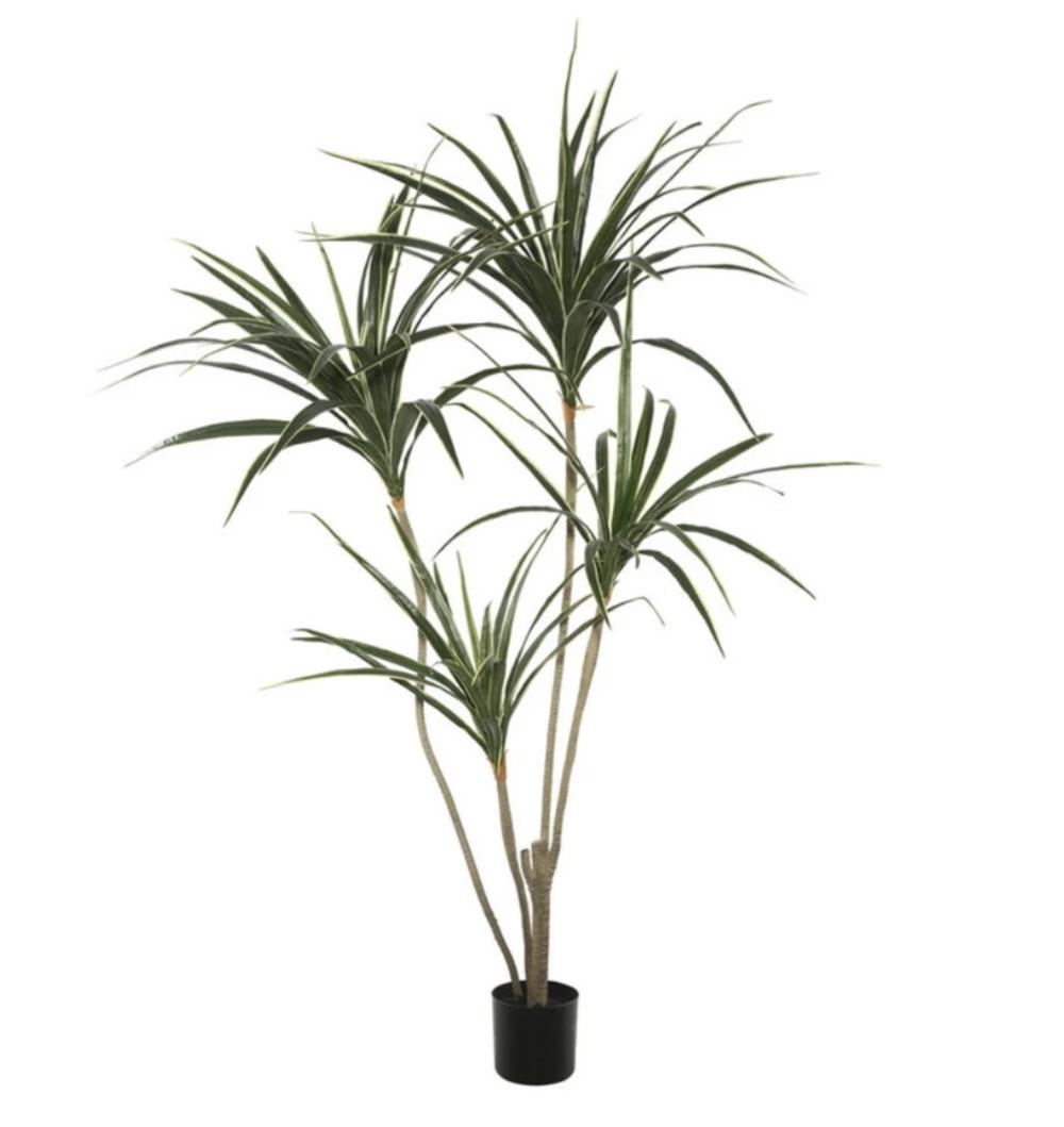 6. Hayneedle palm ($52)