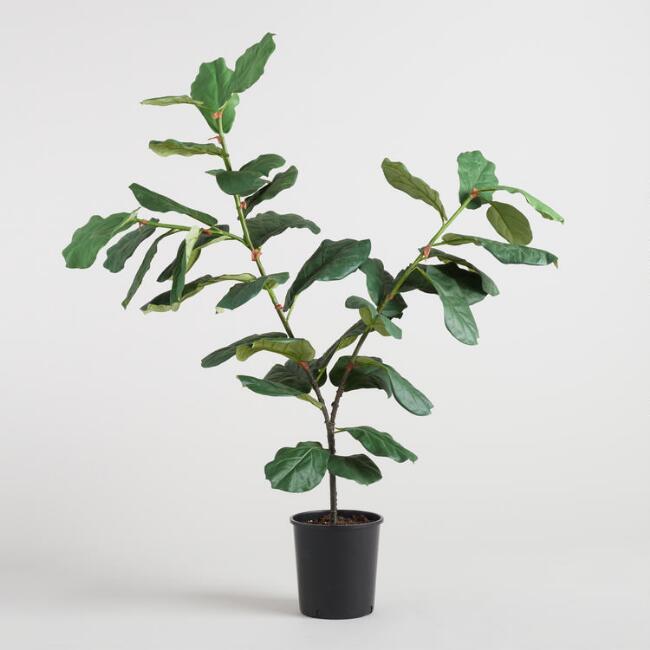 3. World Market Fiddle Leaf Plant ($129)