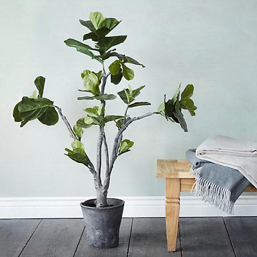7. Terrain Fig Tree ($198)