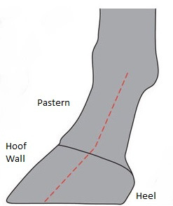 (Fig 3) Forward Foot