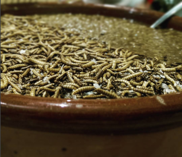 Cumin mealworm tarka dahl -Image courtesy of The Grub Kitchen