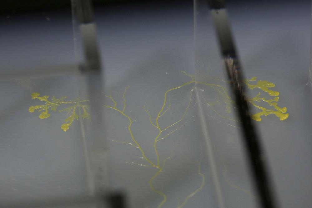The Physarum Experiments Study 019 - The Maze film still. © Heather Barnett