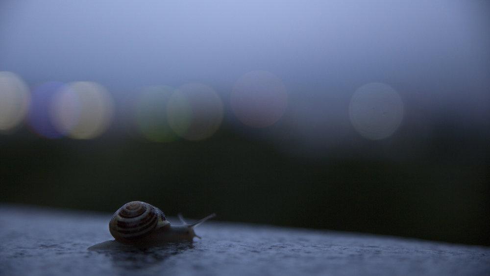 snail_19838007880_o.jpg
