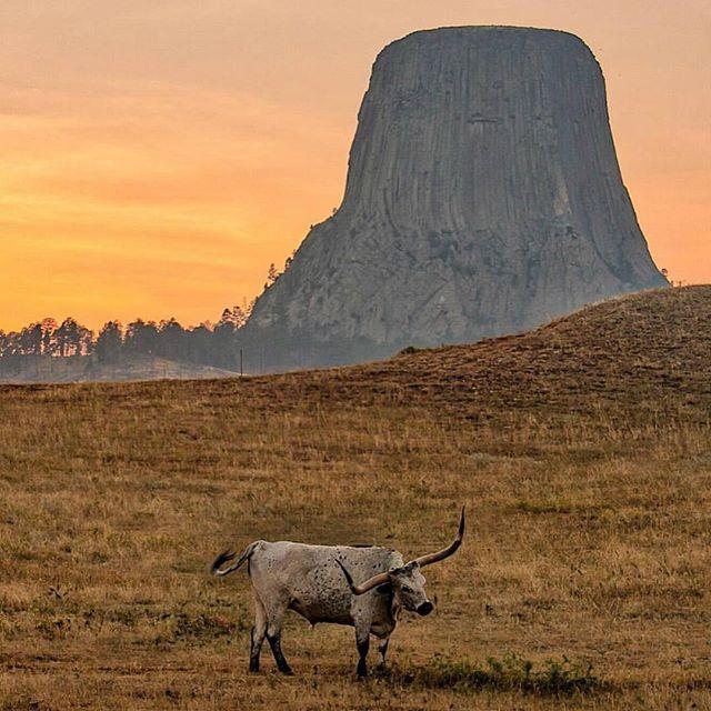 This mornings #postcardworthy shot is from Devils Tower by @susan.haymond  #wyoming #optoutside #longhorns #western #epic #wander