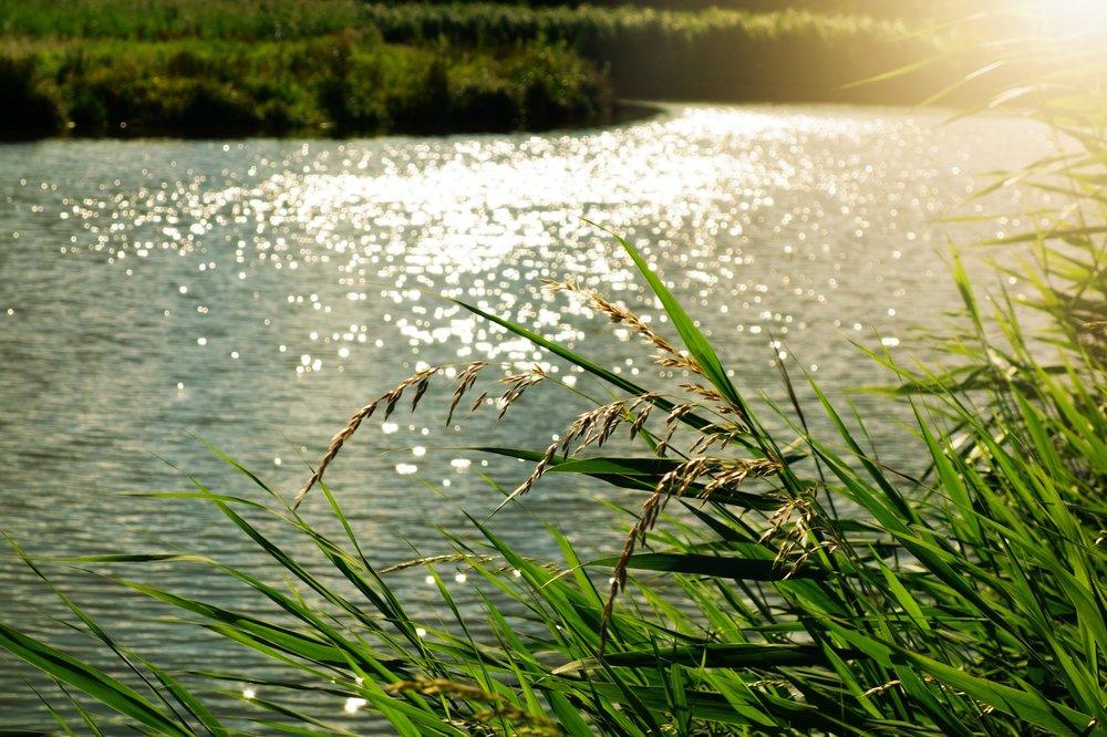 bright-daylight-environment-133682.jpg