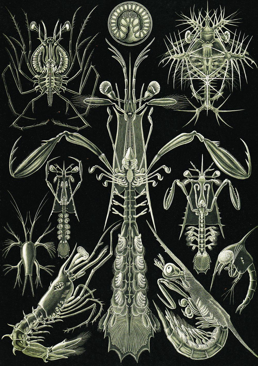 Ernst Haekel 9.jpg