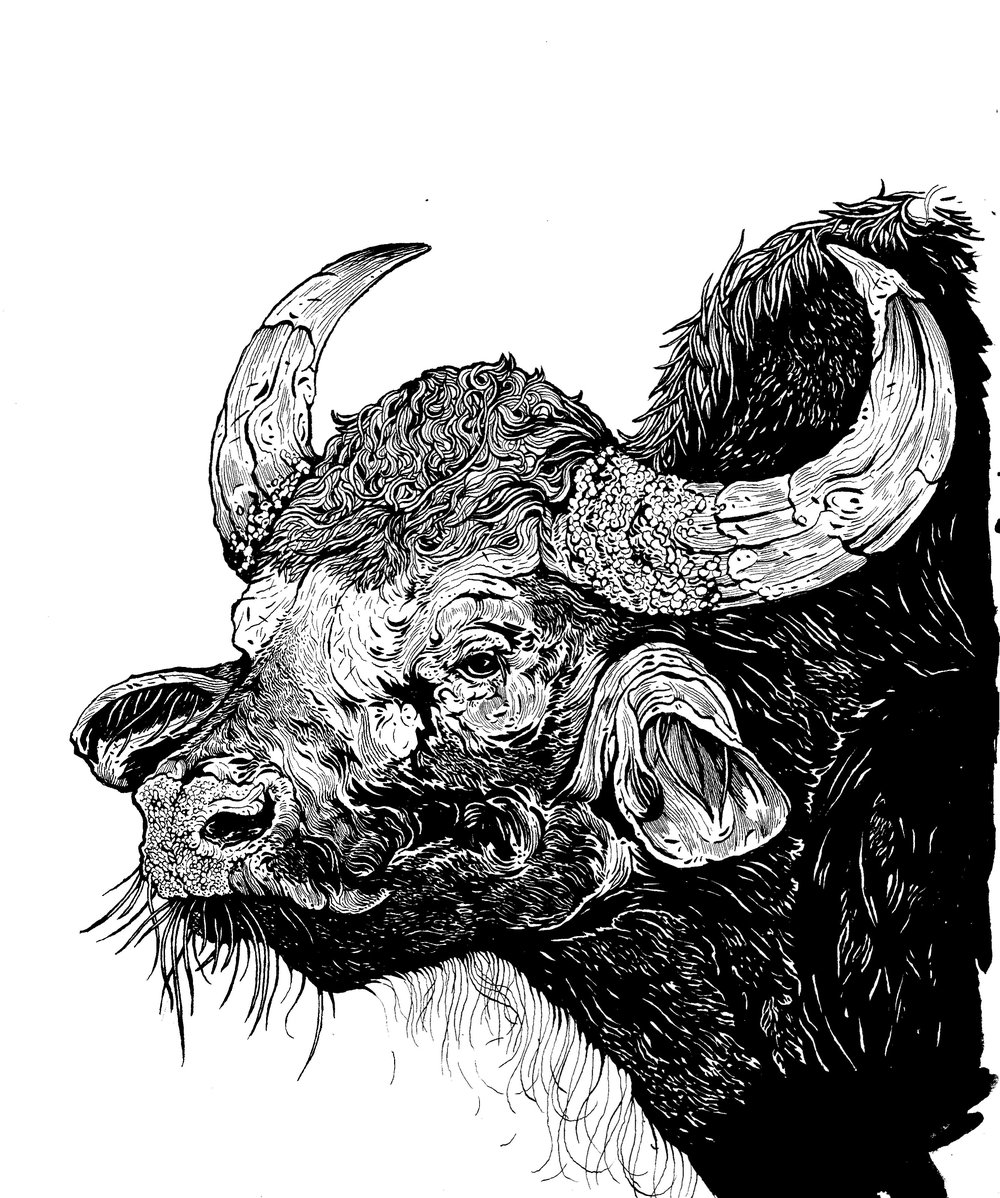 guar finished illustration.jpg